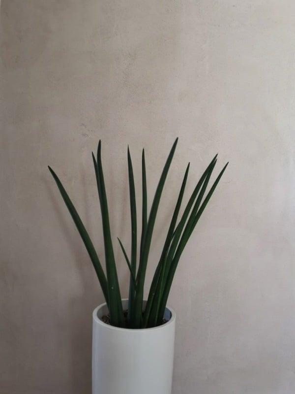 enduit naturel décoratif
